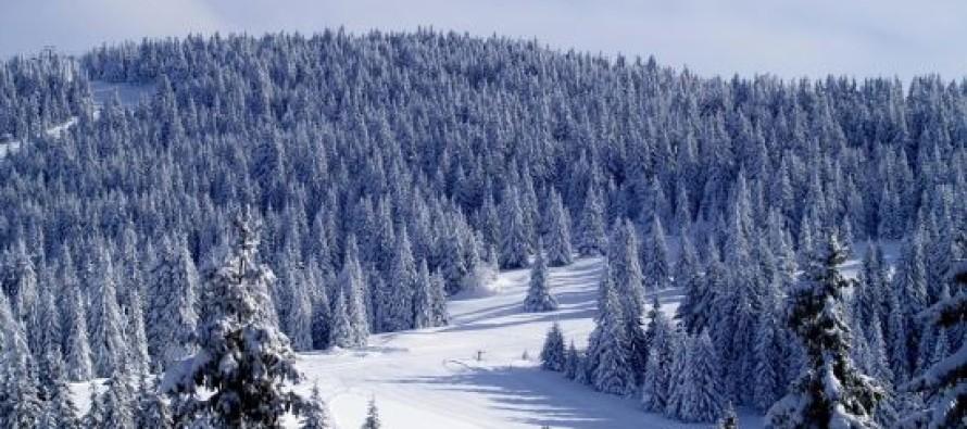 Povećana površina obrasla šumom